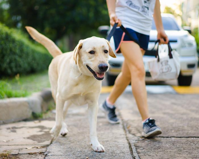 baby steps Pick us pet waste