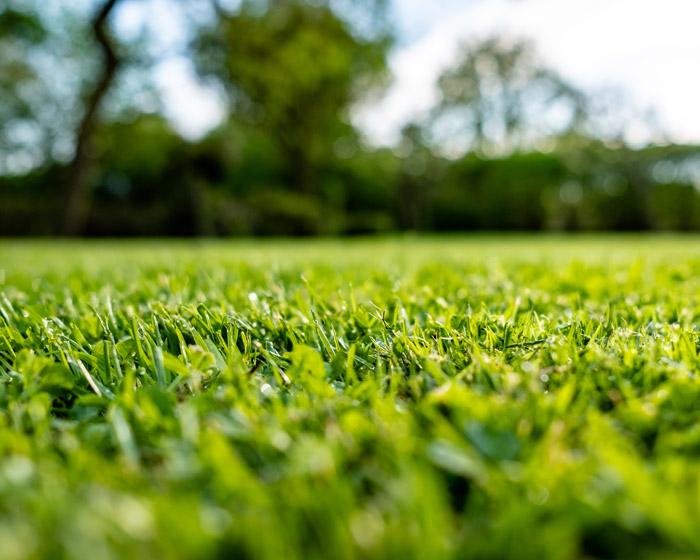 landscaping to prevent soil erosion