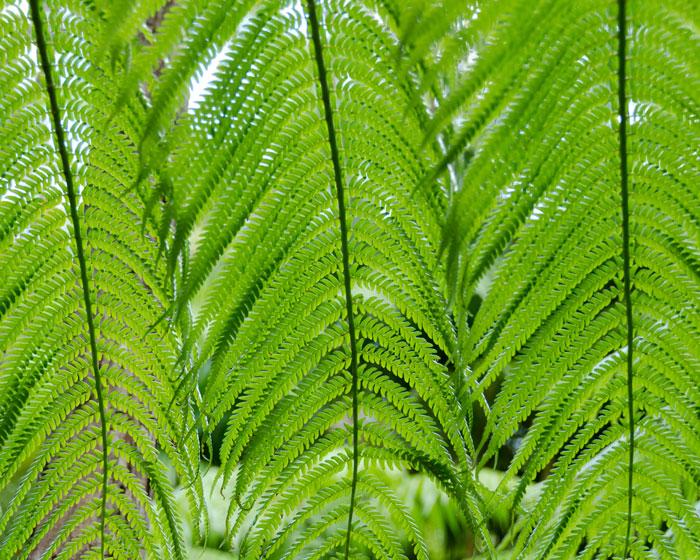 vegetated buffer